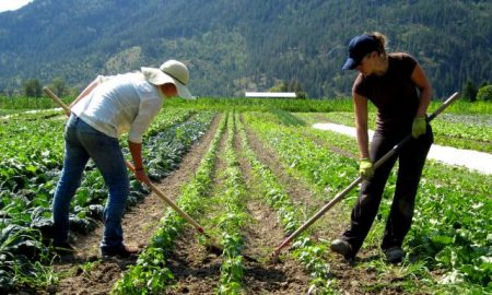 Recruitment For General Farm Worker Job In Canada